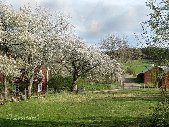 Swedish spring pictures